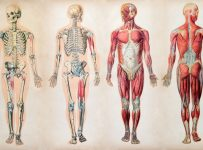curiozitati-despre-corpul-uman