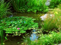 curiozitati-despre-plante