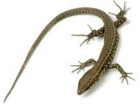 curiozitati-despre-reptile